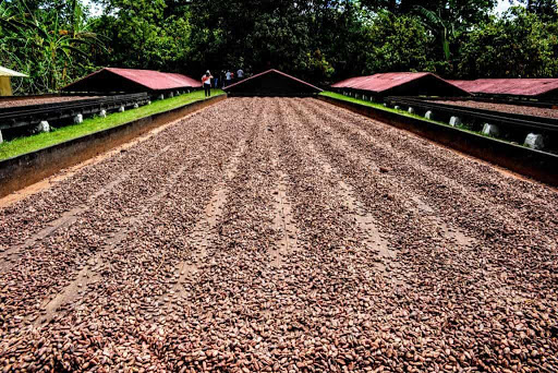 La tierra del cacao, San Francisco de Macorís, el sendero del cacao