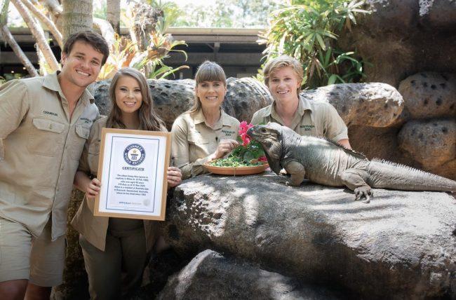 Iguana rinoceronte, endémica de RD, rompe récord de longevidad en Australia