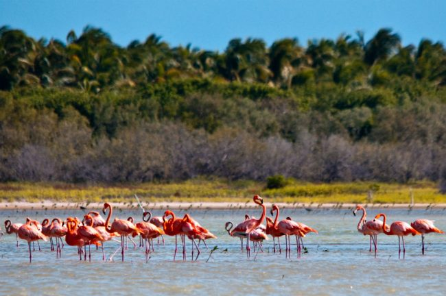 Conoce los humedales más importantes de República Dominicana